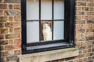 Mycket att tänka på byta fönster