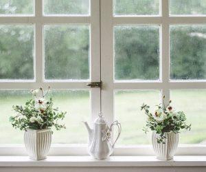 Två fönster med rutor i sig och ett fönsterbräde med två blommor